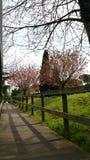 fodrad banatree Royaltyfri Foto