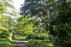 fodrad banatree Arkivfoto