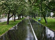 fodrad våt parkvägtree Fotografering för Bildbyråer