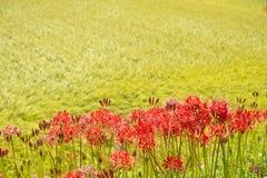 Fodrade röda blommor fotografering för bildbyråer