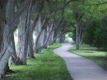 Fodrat härligt dimmigt träd gå banan på dimmig morgon Royaltyfri Foto