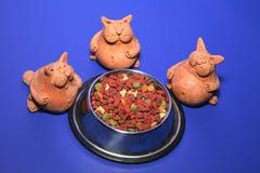 Foerage voor katten Stock Foto's