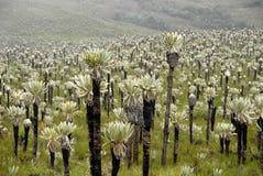 foest exotique des Andes Image libre de droits