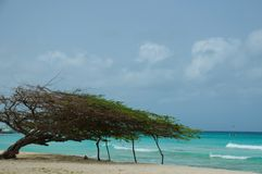 Fofoti-Baum stockfotografie