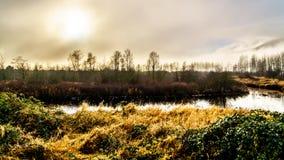 Fog висеть над рекой Pitt и болотом Pitt-Addington в польдере Pitt около клена Риджа в Британской Колумбии, Канады Стоковые Фотографии RF
