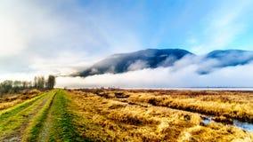 Fog висеть над рекой Pitt и болотом Pitt-Addington в польдере Pitt около клена Риджа в Британской Колумбии, Канады стоковые изображения