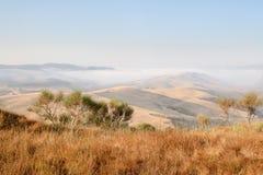 Fog в горах, траве желтого цвета сухой, солитарных деревьях стоковые изображения