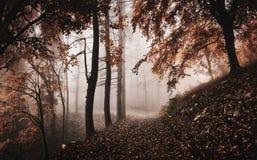 Fog в древесинах с путем горы в переднем плане, landsc осени стоковые изображения