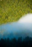 Fog в древесине гор доломитов, Италии Стоковое Изображение RF