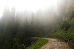 Fog в лесе Paneveggio, Trentino - доломитов Стоковое Изображение RF