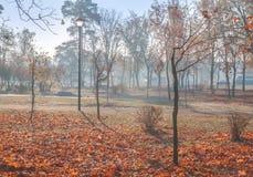 Fog в утре в парке в осени в Киеве Стоковое фото RF