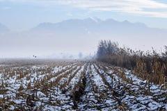 fog горы стоковые изображения rf