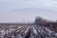 fog горы стоковые фотографии rf