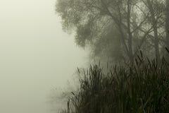 fog Дзэн озера Стоковое фото RF