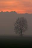 fog зима Стоковые Фотографии RF
