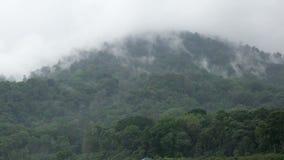 Fog над лесом - облаками приходя быстро над лесом в Бали, Индонезии акции видеоматериалы