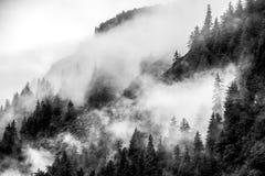 Fog покрывать леса горы с облако нижнего яруса в Juneau Аляске для ландшафта тумана стоковое фото