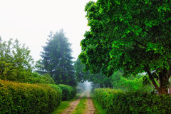 Fog. Ged trees and bushes in alleys of park Stock Photos