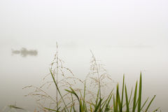 Fog. Reed in the morning fog Royalty Free Stock Images