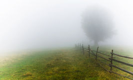 Fog. Autumn mist, tree and fence in fog Stock Photography
