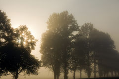 Fog. The morning fog which has shrouded trees Stock Image
