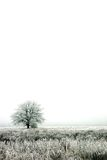 Fog. Winter fog in Latvia, earl morning Stock Photography
