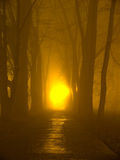 The fog. Park alley in the fog at night Royalty Free Stock Images