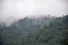 Fog Stock Images