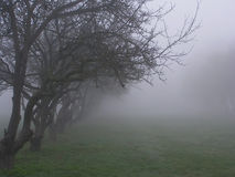 Fog. Trees on a foggy day stock photo