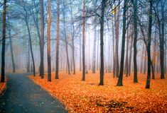 Fog Royalty Free Stock Image