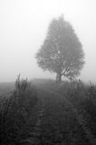 Fog. Road and tree in fog stock images