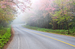 Fog. On road in winter Royalty Free Stock Photo