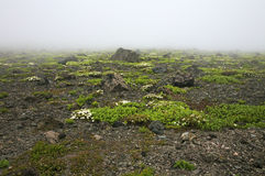 Fog. On a vulcano in Hokkaido in Japan Royalty Free Stock Photos