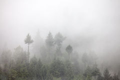 Fog Royalty Free Stock Photos