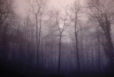 Free Fog Stock Image - 4365311