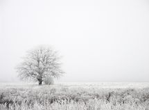 Fog. Winter fog Royalty Free Stock Image