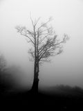 Fog. A gloomy foggy black and white silhouette of a tree Royalty Free Stock Image