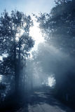 Fog. View with the fog between the trees Royalty Free Stock Photos