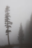 Fog royalty free stock images
