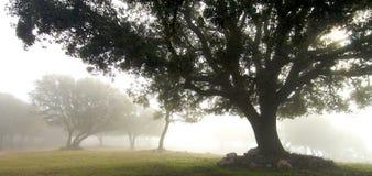 Through the fog Royalty Free Stock Photo
