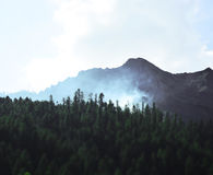 Fog Above Forest Royalty Free Stock Photo