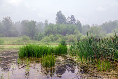 Fog above forest lake Royalty Free Stock Photo