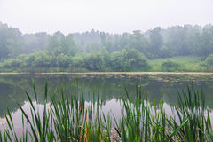 Fog above forest lake Stock Photography