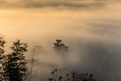 Fog above the forest in minimalist Royalty Free Stock Images