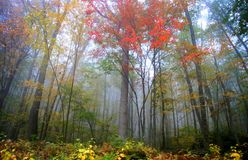 Fog in Allegheny mountains Stock Photography