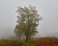 Fog along the Blue Ridge Parkway royalty free stock photo