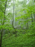 In the fog. On the Appalachian trail in Vermont Stock Photo