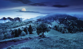 Fog around the the castle on mountain hill at night. Composite summer landscape. fog in conifer forest surrounds the castle on mountain hill with path at night stock image