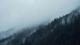 Fog Around Mountain With Trees Royalty Free Stock Photography