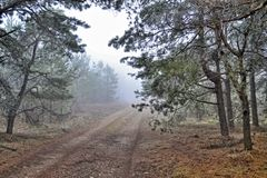 Fog and autumn in the autumn forest stock image